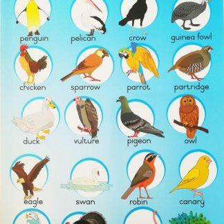 birds poster wall chart