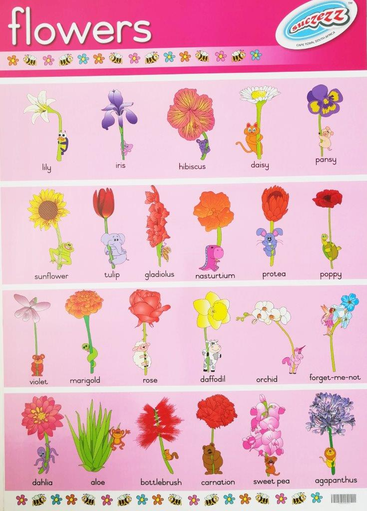 flowers poster wall chart