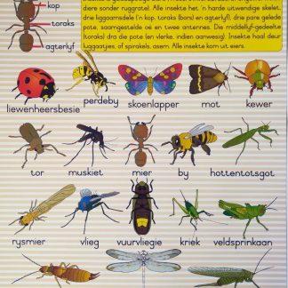 insekte plakkaat muurkaart
