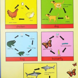 life cycles poster wall chart