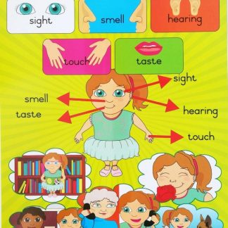 my five senses poster wall chart