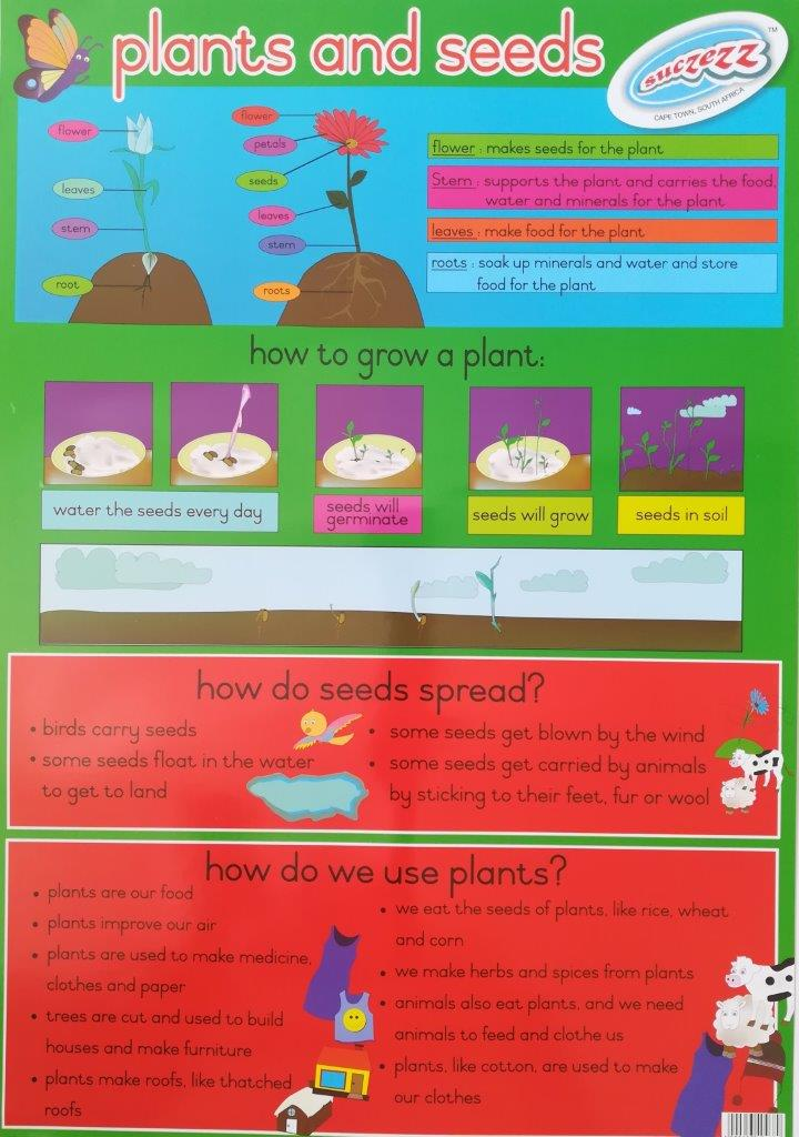 plants and seeds poster wall chart