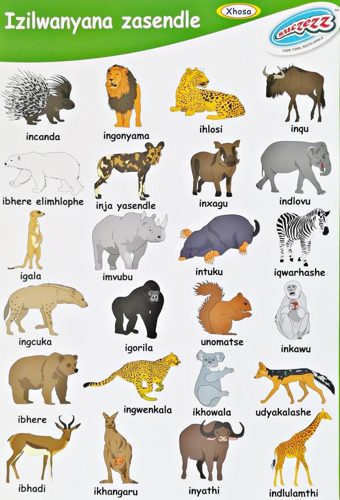 wild animals xhosa poster